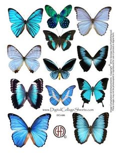 Instant Download Blue Butterflies by DigitalCollageSheets on Etsy, $3.95