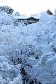 Top 10 Best Places To Visit In Japan Tokyo, Japan's busy capital, mixes th. Beautiful Places In Japan, Beautiful Streets, Japanese Landscape, Amaterasu, Winter Scenery, Kyoto Japan, Best Cities, Japanese Culture, Japan Travel