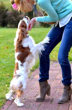 Cavalier King Charles Spaniel! #dogs #animal #king #charles