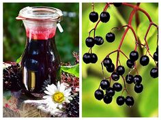 sirop de soc Wind Chimes, Wine Rack, Diy And Crafts, Health, Outdoor Decor, Plants, Medicine, Syrup, Vitamins
