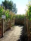 Corn maze- Sykes and Cooper Farm SR207 10-12-12, was lost the ENTIRE time....