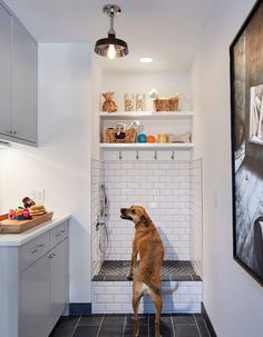 Dog Shower. Laundry room, mudroom with dog shower. This lucky dog gets a room all to himself! Isn't this dog shower great? Tiling: Floor… - Tap the pin for the most adorable pawtastic fur baby apparel! You'll love the dog clothes and cat clothes! <3