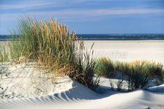 Dünenlandschaft Im Garten Anlegen strandhafer und strandkorb am strand amrum quedens