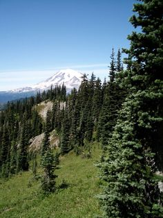 Pacific Crest Trail: Section I.1: White Pass to Chinook Pass. 28 miles, 2200 ft elevation gain. South Cascades.