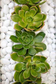 succulent reception wedding flowers,  wedding decor, wedding flower centerpiece, wedding flower arrangement.  www.myfloweraffair.com can create this beautiful wedding flower look.