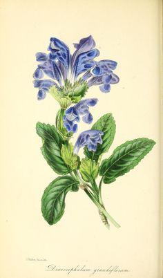 v.13 (1847) - Paxton's magazine of botany, - Biodiversity Heritage Library