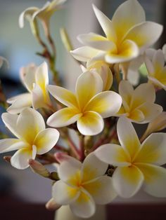 Frangipani! We used to have a huge bush of these outside our house in Hawaii! Loved the scent!
