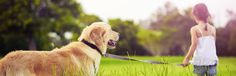 Calculate how many calories your dog needs with our canine calorie calculator. Calculate recommended calories to maintain weight and for weight loss.