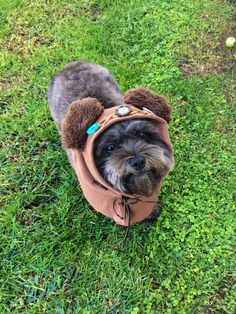 DIY dog Ewok costume. Cut off brown T-shirt sleeve and sew on ears and buttons. So easy but oh-so-cute!