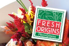 {} SOURCES {}  FRESH ORIGINS FARMS grows a huge variety of MicroGreens, PetiteGreens, TenderGreens™, MiniCrowns™,Tiny Veggies™, Shoots, and Edible Flowers.   ...  We sell through distributors. For individual quantities, please click on these sources for our products: Food Innovations, Gourmet Sweet Botanicals, and Marx Foods.
