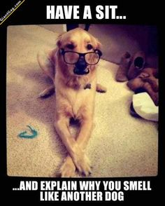 Why It Smells Like Another Dog,  Click the link to view today's funniest pictures!