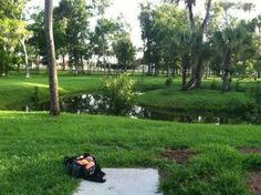Tuscawilla Park in Daytona Beach, FL - Disc Golf Course Review