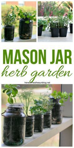 Create this Space Saving Mason Jar Herb Garden in Minutes! A mason jar herb garden is the perfect gardening solution if you have limited outdoor space. This tutorial will teach you how to make one! Mason Jar Herbs, Mason Jar Herb Garden, Mason Jars, Pot Mason, Herbs Garden, Organic Gardening, Gardening Tips, Vegetable Gardening, Indoor Gardening