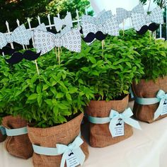 Basil tree in burlap pouche Baptism Party Decorations, Centerpiece Decorations, Boy Baptism, Christening, Baby Time, Little Man, Holidays And Events, Event Decor, Kids And Parenting