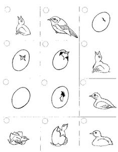 Stunning coloring pages: Bird life cycle coloring pages Amazing Coloring sheets Montessori Science, Science Activities For Kids, Teaching Science, Sequencing Activities, Coloring For Kids, Coloring Pages, Coloring Sheets, Bird Life Cycle, Birds For Kids