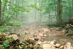 Catoctin Mountain NP, Maryland, USA