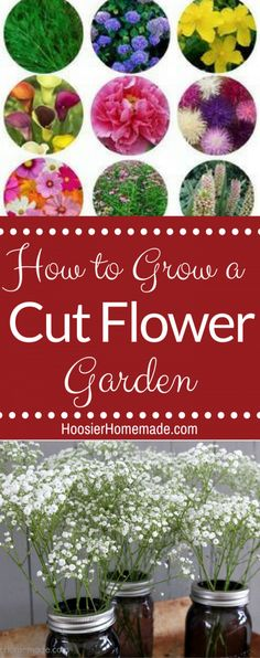 How to Create a Cut Flower Garden -- walk out to your garden and cut fresh flowers whenever you need them!