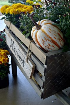 How to build a rustic wheelbarrow, the perfect touch on a fall porch. Learn to…