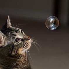 cute cat focusing on a floating bubble                                                                                                                                                                                 More