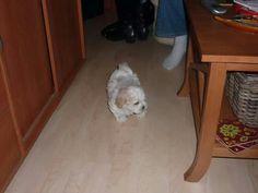 Binky als puppy