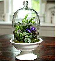 old world charm terrarium kit white flower farm indoor. Black Bedroom Furniture Sets. Home Design Ideas