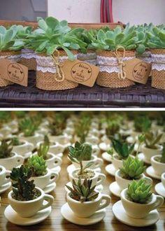 Las suculentas han tomado protagonismo después de tantos años de ser cultivadas. Son plantas que apenas requieren cuidados, y son muy nobles a pesar de eso. Nos regalan su belleza sin igual y su ca…