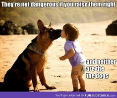 My puppy is dangerous when you scare her, so robbers prepare to die cause A a, my German Sheppard is a defender dog!