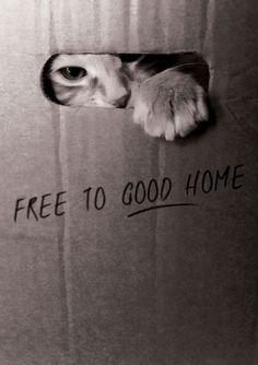 Homelessness happens to many people and animals, there are many shelters that try to help the people and animals in need.