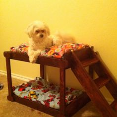 Puppy bunk beds for Peanut and Prince