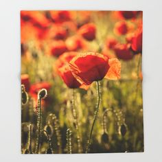 Poppies in LOVE Throw Blanket