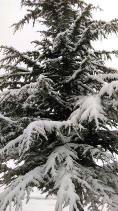 Winter ⛄🌲