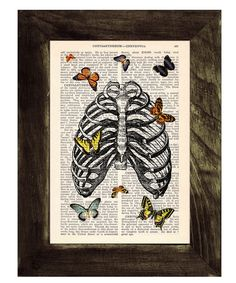 Butterfly Collage via Encyclopedia Americana.