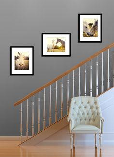 horse photography collection wall art home decor horse lovers horse photograph three 11x14 gift set