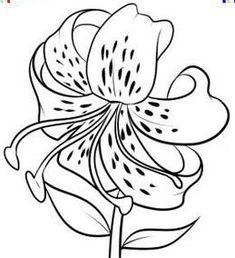 Как нарисовать лилию на бумаге карандашом