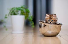 Cat Care Top Tips And Advice. Beautiful movements, intelligence and many different noises. All these things you get as a cat owner. Cute Cats And Kittens, Baby Cats, Kittens Cutest, Baby Animals, Cute Animals, Baby Kitty, Cat Tags, All Nature, Pretty Cats
