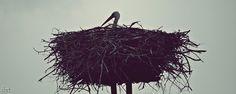 #bocian #ptaki #fotografia