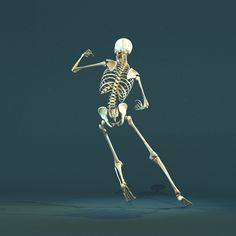 skeleton | images | pinterest | skeletons, human body and sketch books, Skeleton