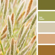 Color Palette #3294