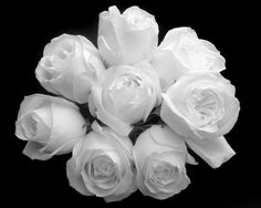 242732dcc0267562342e90a99d190d8b  white rose bouquet white roses
