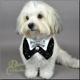 Looks like my Bailey boy! Are you eloping Bay?!