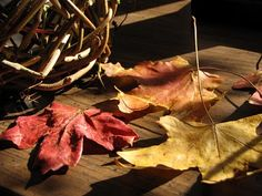 Autumn leaves preserved with glycerin