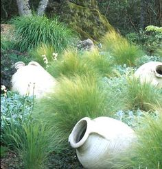 Feathergrass