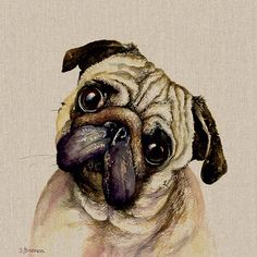 Pringle depicts classic Pug features and will add charm and character to any room you choose to put him in. Jane Bannon is a self-taught artist, specialising in stunning watercolours of farmyard and domestic animals. Her life in the countrysi Watercolor Moon, Watercolor Animals, Watercolour Painting, Watercolours, Canvas Prints, Art Prints, Canvas Art, Farm Yard, Pugs