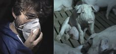 Ana Pardo, directora de Público, se moja y da su opinión tras el polémico programa de Salvados sobre las granjas de cerdos en España:  #cerdos #cerdo #animales #animal #granja #granjas #jordievole #evole #salvados #pig #pigs #spain #españa #noticia #noticias #schnauzi #maltratoanimal