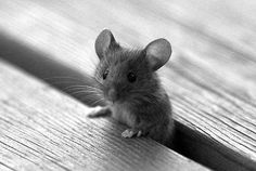 The cutest thing! Such a tiny mouse!