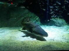 Shark ,Two Oceans Aquarium, Cape Town,South Africa Ocean Aquarium, Cape Town South Africa, Oceans, Shark, Pets, Photography, Animals, Photograph, Animales