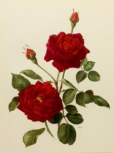antique roses print - Google Search