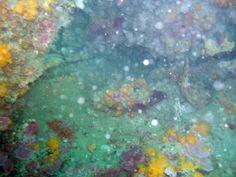 Buceo en Conil-Las Agujas con OCEAN ADDICTS