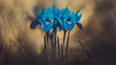 Flower Photos, Trees To Plant, Iris, Most Beautiful, Flora, Photography, Jewelry, Photograph, Jewlery