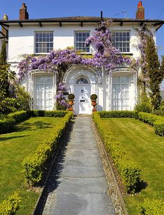 Dorset England - Private house in Charmouth with flowering 'Wisteria sinensis' vine.. by edk7 on Flickr